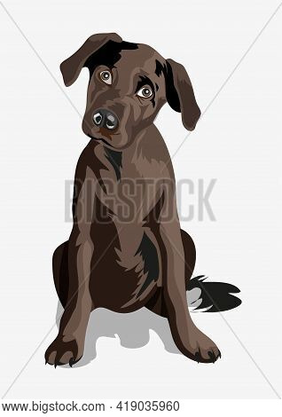 Cute Black Funny Dog. Puppy. Black Great Dane. A Beautiful Black Puppy With Big Eyes Wags Its Tail A