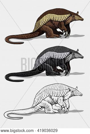 A Giant Armadillo With Thick Legs Stands On The Ground. Big Fat Animal. Isolated In White Background