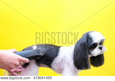 Groomer Working In Salon, Making Haircut At Pet Salon. Trimmer. Copy Space