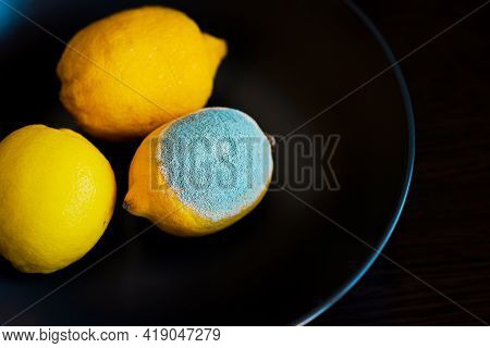 Three Whole Yellow Bright Lemons On A Dark Blue Plate. One Lemon With Light Textured Mold, Another T