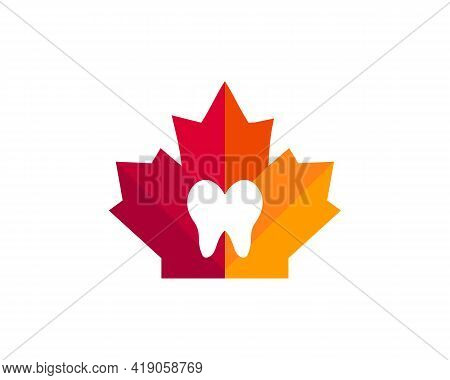 Maple Teeth Logo Design. Canadian Medical Logo. Red Maple Leaf With Tooth Vector