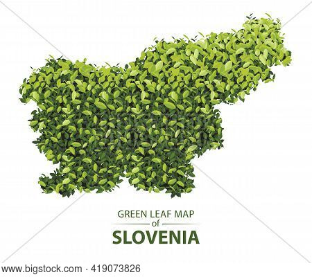 Slovenia Map Made Up Of Green Leaf On White Background Vector Illustration Of A Forest Is Conceptual