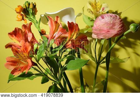 Very Nice Colorful Spring Garden Flower Close Up