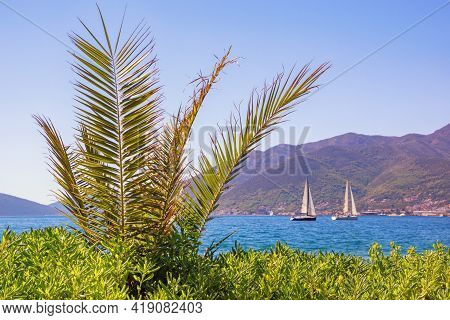Beautiful Mediterranean Landscape On Sunny Summer Day.  Palm Tree ( Phoenix Canariensis )  On The Sh