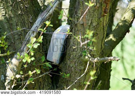 Found Geocaching Hiding Place With A Cache In A Box In A Tree In The Herrenkrugpark Near Magdeburg I