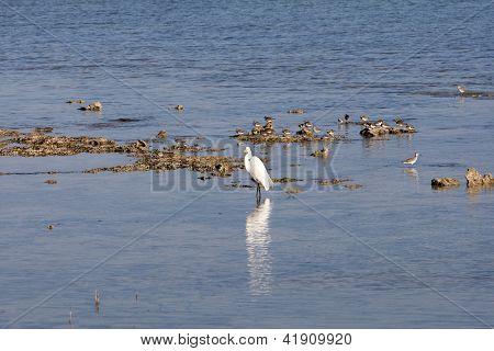 Ocean Birds In The Water