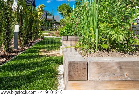 Growing Organic Vegetables In Backyard Garden. Sunny Summer Weather. Chive And Other Veges In Large