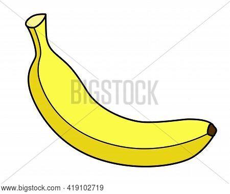 Banana. Bright Yellow Ripe Banana - Tropical Fruit - Vector Full Color Illustration. A Juicy Healthy