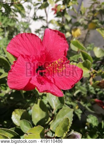 An-numan Sister Flower. Flower In The Garden. A Flower On A Spring Day. Colorful Flower. Flower Deco