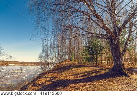 Spring Landscape With A Birch Tree That Stands On The High Bank Of The River On Which Floes Float.