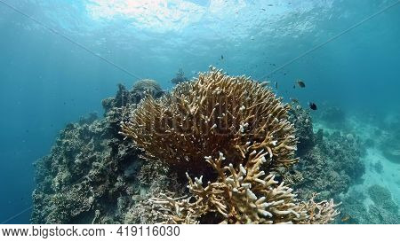 Tropical Fishes And Coral Reef At Diving. Beautiful Underwater World With Corals And Fish.