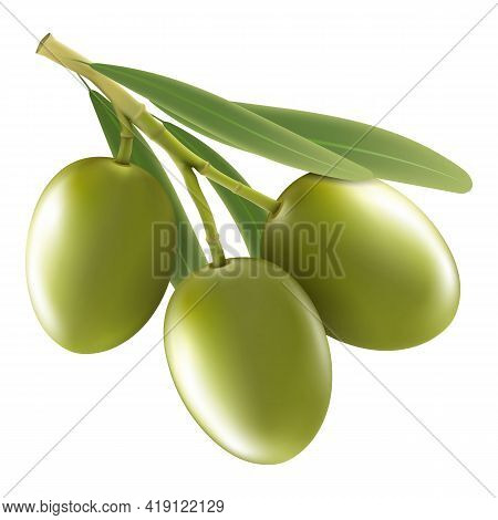 Green Olive Branch Isolated On White Background As Package Design Composition. Realistic Vector, 3d