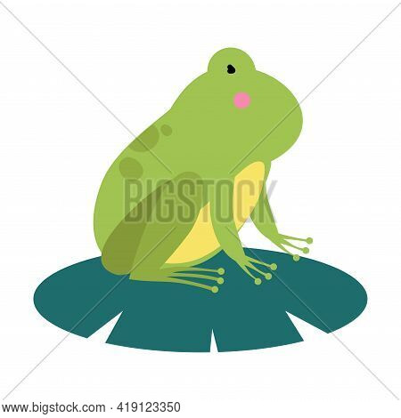 Cute Green Frog Amphibian Animal Cartoon Vector Illustration