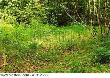 Vegetative Background From Leaves And Plants. Lush, Natural Foliage. Green Vegetation Backdrop. Top