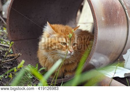 A Stray Cat Sitting Inside A Pipe.