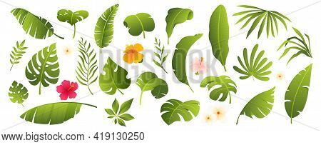 Tropical Leaves Collection. Tropical Plants And Flowers Isolated On White. Elements For Your Design.