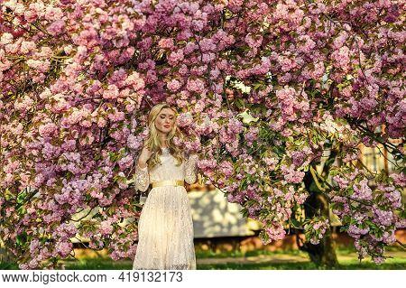 Aroma Concept. Sakura Tree Blooming. Sakura Season. Tender Fragrance. Seasonal Allergy. Lost In Flow