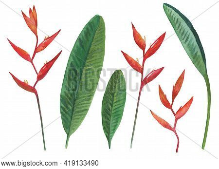 Set Of Watercolor Painted Heliconia Flowers And Leaves Isolated On White Background. Tropical Botani