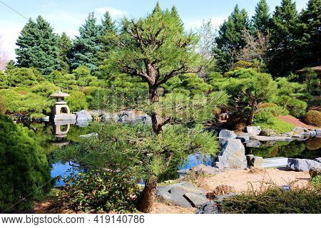 Lush Manicured Plants And Trees Surrounding A Koi Pond At A Zen Japanese Spiritual Garden Taken In T