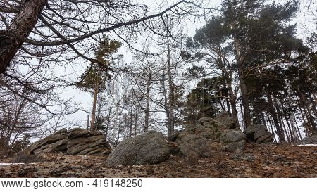 Winter Leafless Deciduous And Coniferous Trees Against The Sky. In The Foreground, On Sandy Soil, Th
