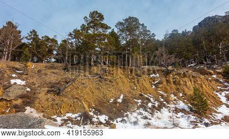 Coniferous Forest On The Hillside. Bare Tree Roots Are Visible. Winter Day. Blue Sky.