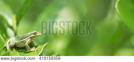 American green tree frog sitting on wet leaves in the bottom left corner of the image leaving blank copy space for text.