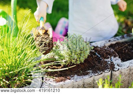 Close-up Of Little Toddler Girl Holding Garden Shovel With Green Plants Seedling In Hands. Cute Chil