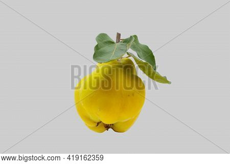 Ripe Quince Fruit With Leaves On An Isolated Background.