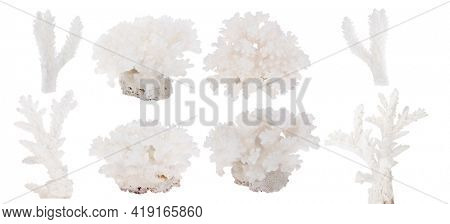 light corals isolated on white background
