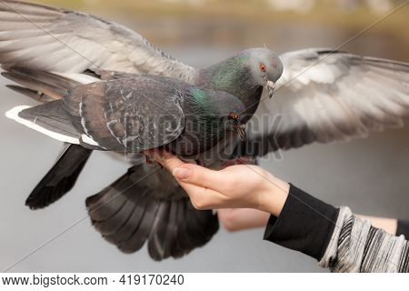 Two Pigeons Sitting On A Hand