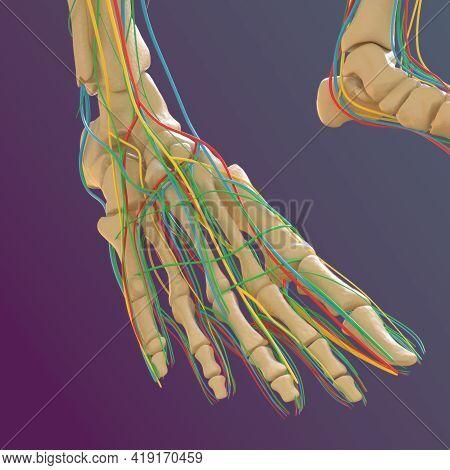 Human Skeleton Anatomy Femur Bone 3D Rendering