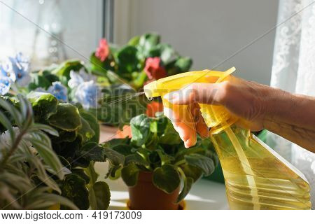 Senior Woman Spraying Plants With Clean Water On The Windowsill By The Window. Houseplant Care. Hous