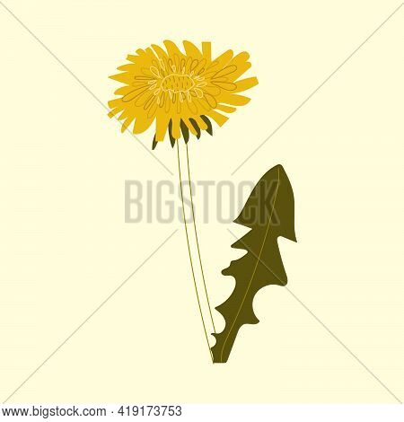 Hand Drawn Dandelion Flower. Flat Botany Illustration.