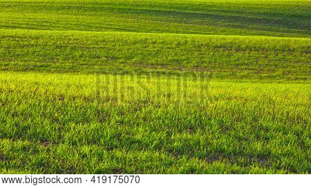 Spring Landscape With Green Waves Hills, Spring Green Fields, Lithuania