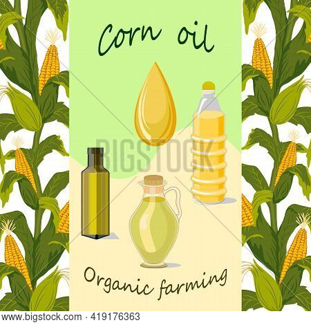 Colored Illustration With Corn And Oil.vector Set Of Corn And Corn Oil Bottles.