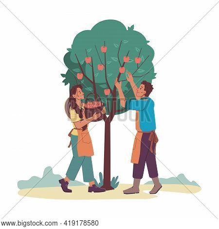 Gardeners Man And Woman Gathering Harvest From Apple-tree Isolated Cartoon Characters. Vector Farmer
