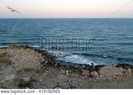 Stony Beach, Sea View And Flying Seagull. Seasonal Natural Background.