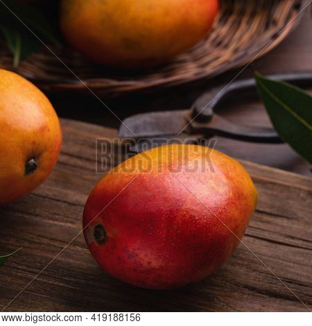 Mango. Fresh Mango Fruit On A Bamboo Sieve Over Dark Wooden Table Background.