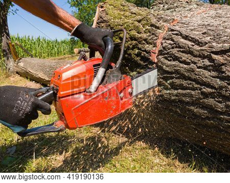 Bosnia And Herzegovina - July 16, 2020: Man Cut The Big Oak Log With Petrol Chainsaw, Safety At Work
