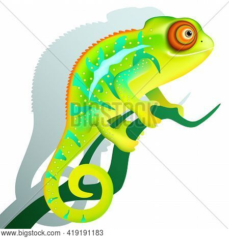 Funny Cartoon Colorful Chameleon Is Sitting On Branch. Exotic Tropical Animal With Shadow On White B