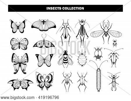 Insect Collection. Butterfly Beetle Dragonfly, Black Insects Silhouettes. Spring Summer Flying Anima