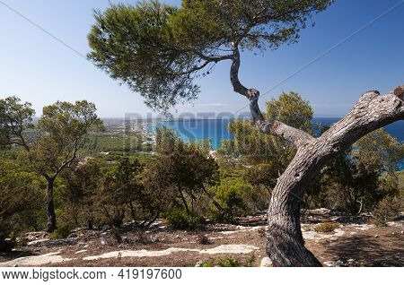 Panoramic View From El Mirador, Of The Trees And The Coast Of The Island Of Formentera. Concept Of T