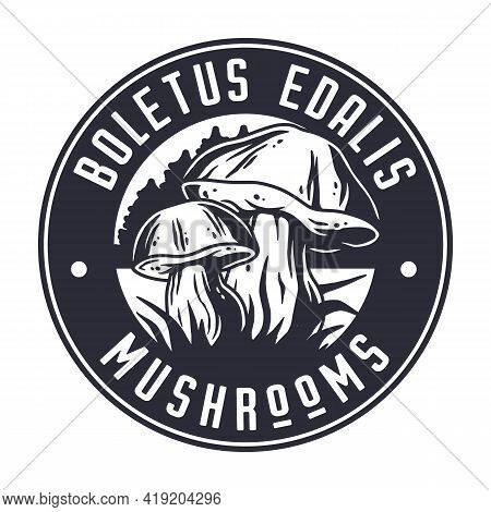 Mushroom Picking Porcini, Cep Or Boletus Fungi