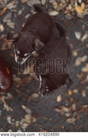 Beautiful And Happy Two Cute Adorable Puppies Are Sitting In The Autumn Park Cute Puppy Looking At T