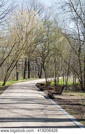 Panoramic View Of The Park In Early Spring. Park Alley With Benches And Trees With Young Greenery.