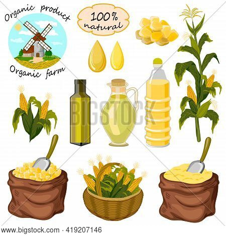 Colored Vector Set With Corn.vector Set Of Corn And Products From It On A White Background.
