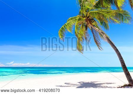 Coconut Palm Tree On White Sandy Beach In Punta Cana, Dominican Republic. Vacation Holidays Summer B