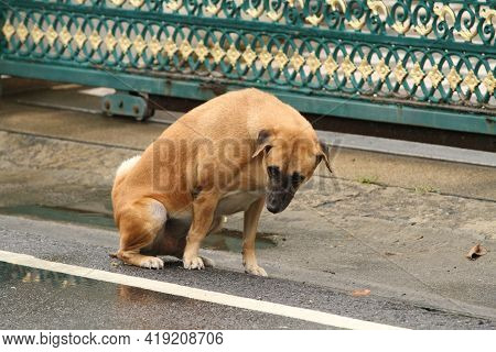 Dog Peeing And Pooping At Front Of House Gate