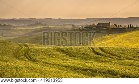 Yellow Wheat Fields With Tuscan Village In The Background In Rainy Weather, Tuscany, Italy, April.