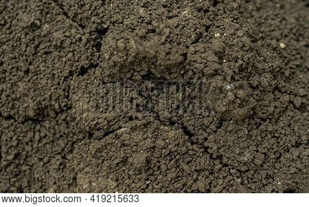 Image Of Cracked Ground For Background. Background Of Earth And Dry Earth With Cracks, Macro Photogr